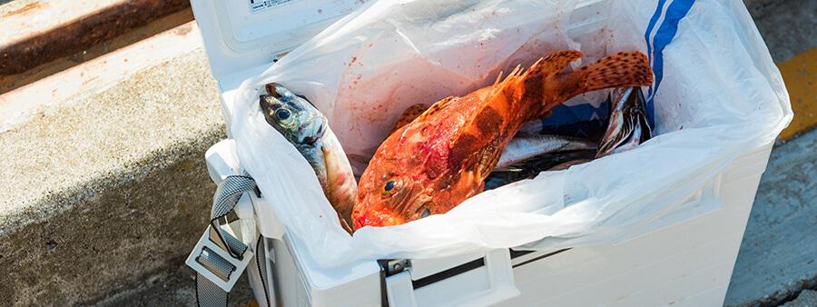 豊富な魚種が一年中釣れるフィッシングスポット