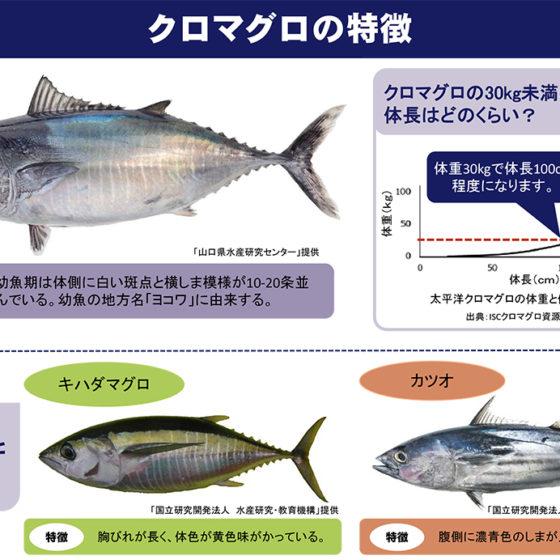 遊漁によるクロマグロ採捕禁止に関するお知らせ